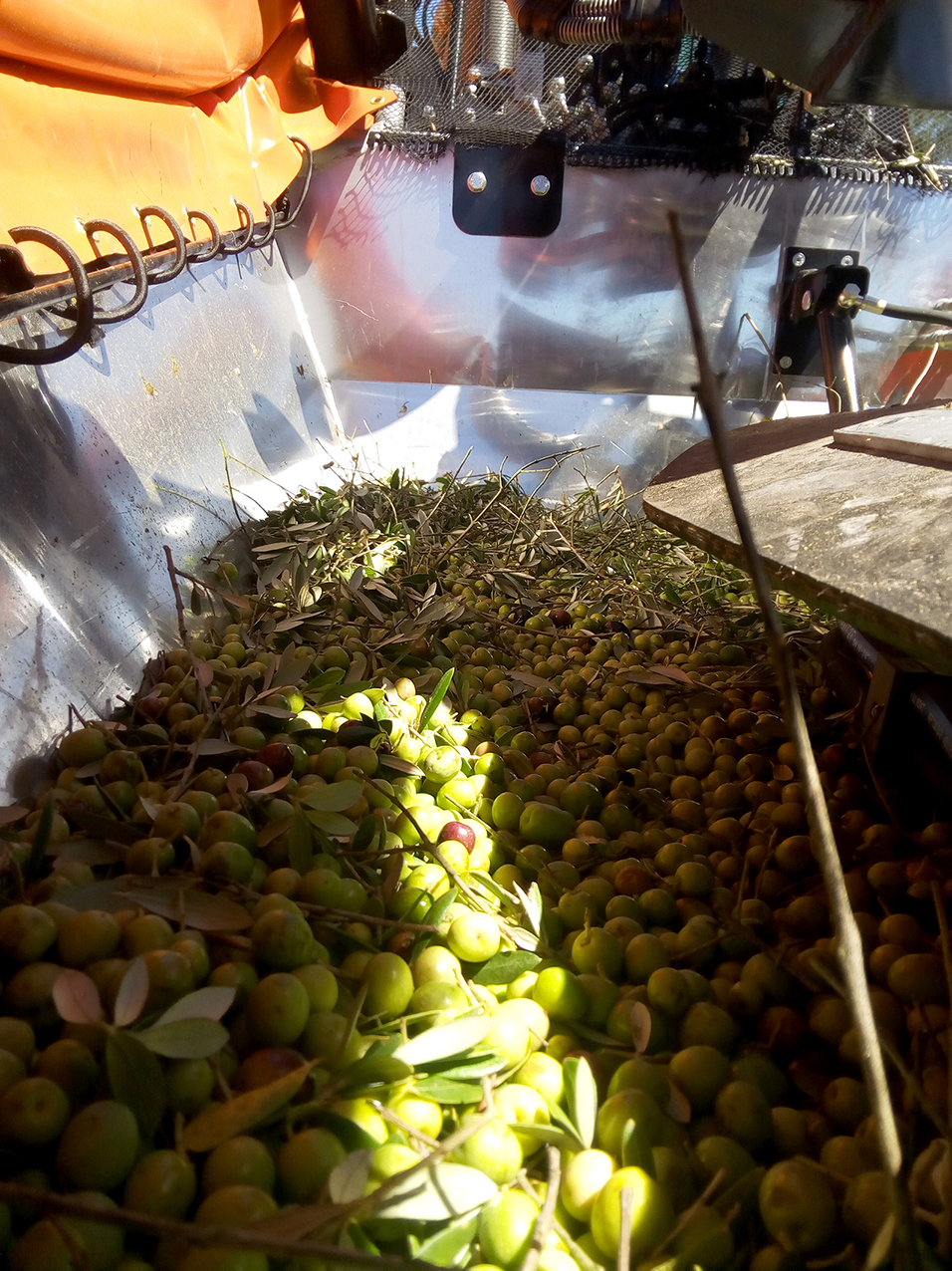 olives_and_dried_fruits_vibration_agromelca