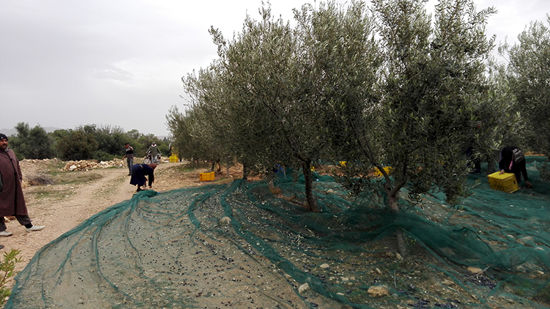 equipments_of_harvester_for_almonds_and_olives