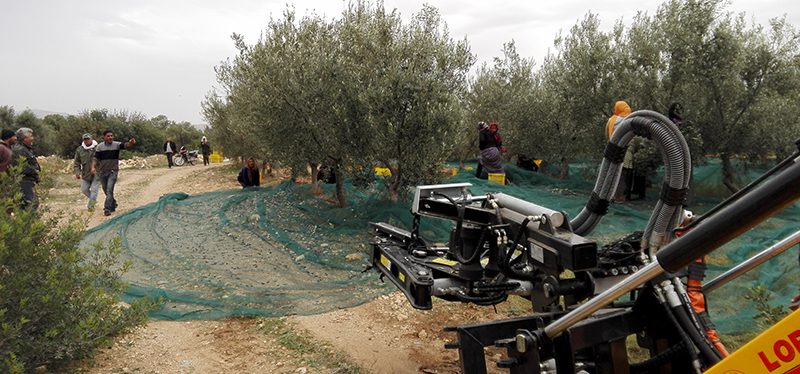 harvesters_of_almonds_and_olives_agromelca