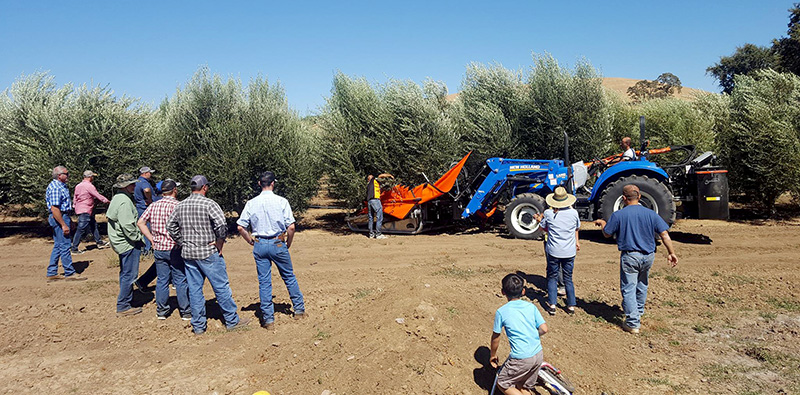 demonstration_of_collectors_equipments_for_almonds_olives_and_dried_fruits_agromelca