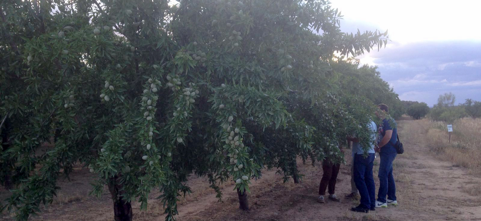 equipment_harvesting_for_almond_olives_pistachios_walnuts_agromelca