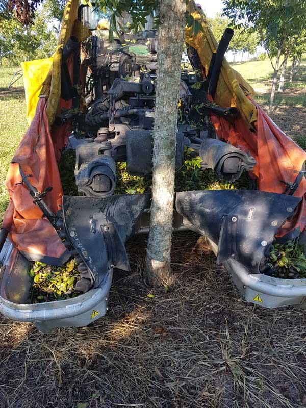 recolector de frutos secos delantero TRV